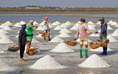 Kenapa Indonesia Terus Impor Garam, Karena Produksi Dalam Negeri Cuma 2 Juta Ton Sedang Kebutuhan 4 Juta Ton